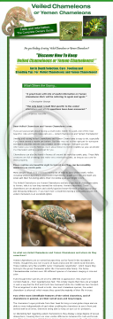 veiled-chameleons-or-yemen-chameleons-facts-and-information-guide.png